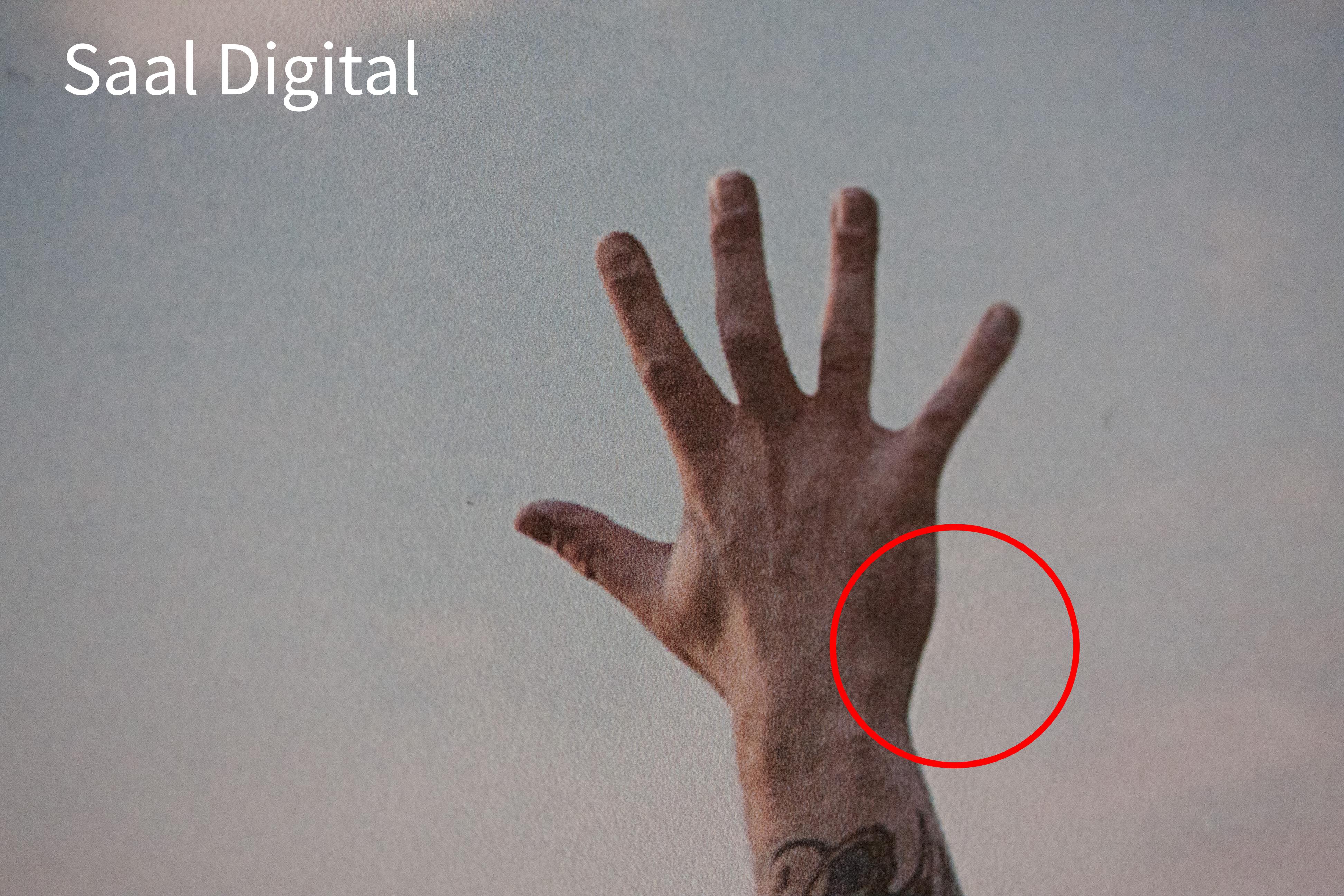 Vergleich: Alu-Dibond Saal Digital Vs. DeinWunschmotiv