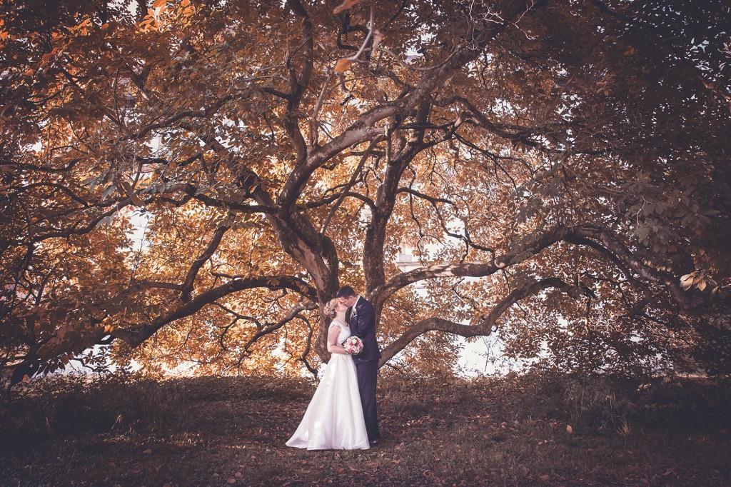 Brautpaar unter Magnolienbaum im schloss wehrden
